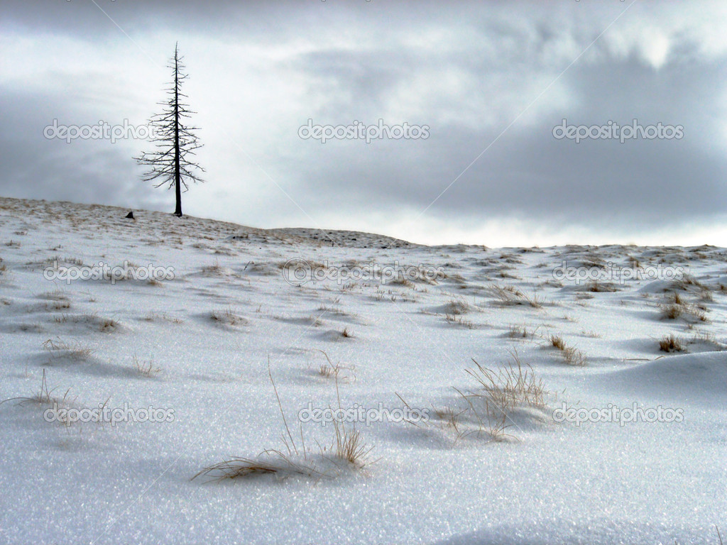 Winter mountainside with lonely dried up fir tree on cloudy sky background  Stock Photo #7995010