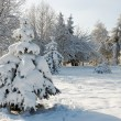 Winter fir — Stock Photo #8002941
