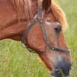 Horse on meadow — Stock Photo #8008024