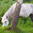 Horse on meadow — Stock Photo #8008039