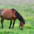 Horse on meadow — Stock Photo #8008041