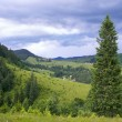 Summer mountain view — Stock Photo #8008112