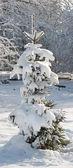 Abeto de invierno — Foto de Stock