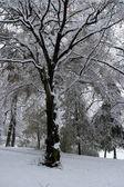 Winter tree — Stock Photo
