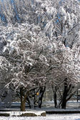 Vinterparken väg — Stockfoto