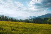 Prado de la montaña de verano — Foto de Stock