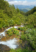 Summer mountain river — Stockfoto