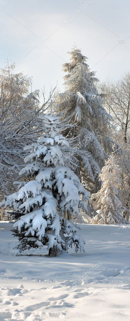 Winter snow covered small fir tree in city park  Stock Photo #8002080