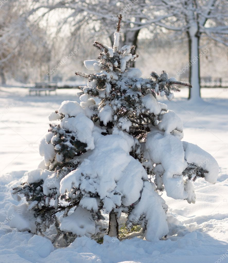 Winter snow covered small fir tree in city park — Stock Photo #8002086