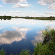 Summer rushy evening lake — Stock Photo