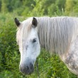 Horse on meadow — Stock Photo #8080883