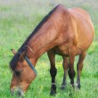 Stock Photo: Horse on meadow