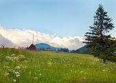Florescimento prado — Fotografia Stock