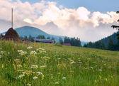 сумерки цветущий луг — Стоковое фото