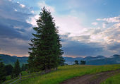 Twilight mountain meadow — Stock Photo