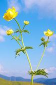 Kwiaty górskie — Zdjęcie stockowe
