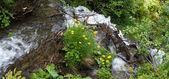 Mountain waterfall — Stock Photo