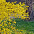 Yellow tree — Stock Photo