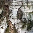 Bark 2 — Stock Photo #8098197
