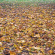 Autumnal gradient (2) — Stock Photo