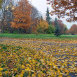 Autumn park — Stock Photo #8098958