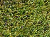 Moss — Stock Photo