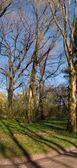 Spring park — Stockfoto