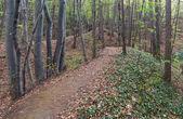 春の森 — ストック写真