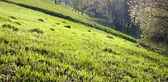 Frühlingsgras — Stockfoto