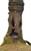Wood-goblin — Stock Photo