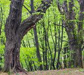Forest hill — Stock fotografie