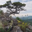 Stock Photo: Tree on mount