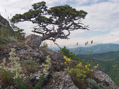 Tree on mount — Stock Photo