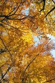 Hösten guld — Stockfoto