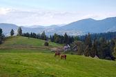 Horses on mountainside. — Stock Photo