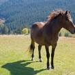Horse on mountain — Stock Photo