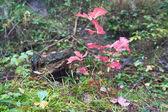 Malé podzimní strom — Stock fotografie