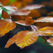 Autumn twig — Stock Photo