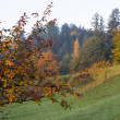Stock Photo: Autumn hill