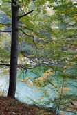 Tree and river — Stock Photo