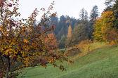 Autumn hill — Stock Photo