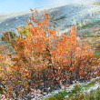 First winter snow and autumn colorful foliage on mountain - Stock Photo