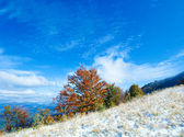 First winter snow and autumn colorful foliage on mountainside — Stock Photo
