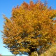 Stock Photo: Autumn big tree on mountainside