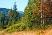 Morning misty autumn mountain landscape — Stock Photo