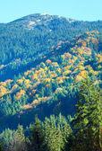 Podzimní horský les — Stock fotografie