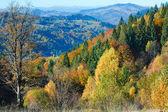Col nimchich automne — Photo