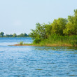 Summer rushy lake — Stock Photo #9702305