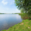 Summer rushy lake — Stock Photo #9702352