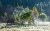 Morning misty autumn mountain landscape — ストック写真